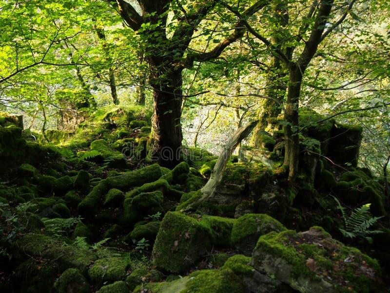La lumière du soleil par des arbres dans une forêt avec les feuilles vibrantes de vert et la mousse dispersée a couvert des roche image libre de droits