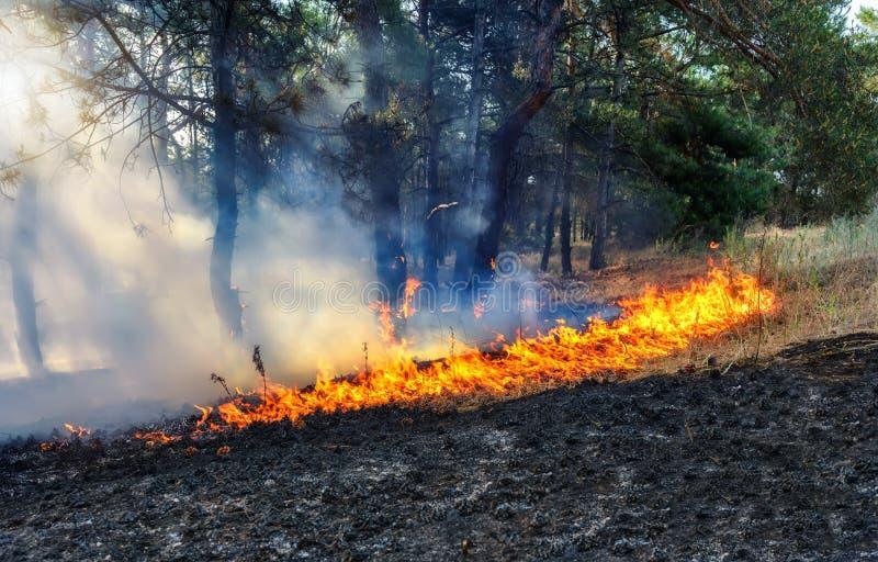 La lumière du soleil traverse la fumée d'un incendie de forêt photos libres de droits