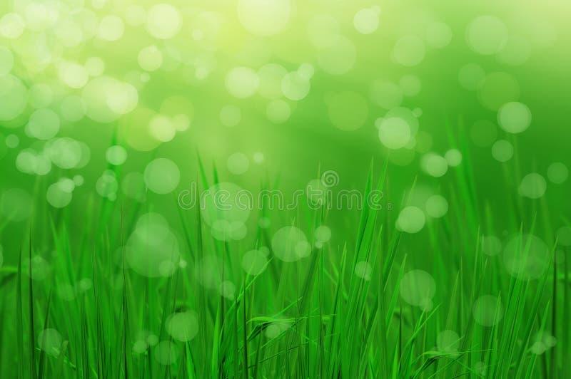 La lumière se reflètent de l'herbe fraîche en soirée photographie stock libre de droits