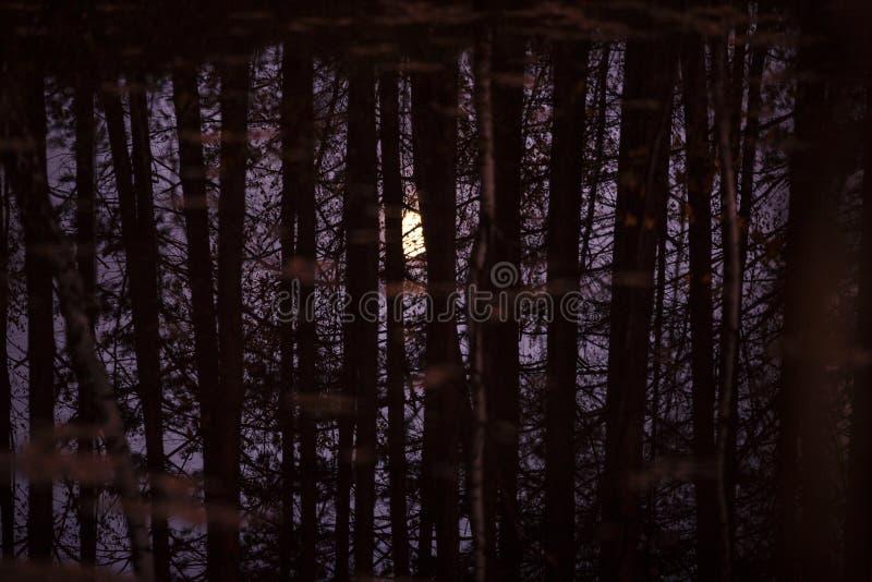 La luna è riflessa nell'acqua attraverso i tronchi ed i rami degli alberi fotografia stock