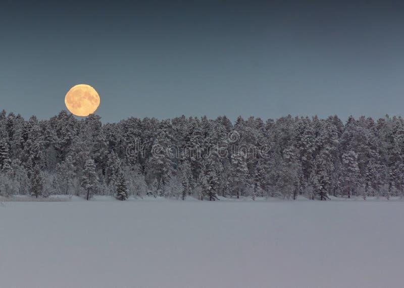 La luna del sangue appende nel cielo sopra gli alberi in un nevoso, l'inverno, paesaggio immagine stock