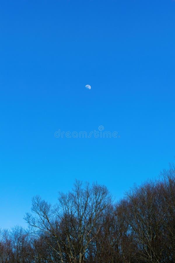La luna que se eleva arriba sobre los tops del árbol de un bosque en el norte del estado Nueva York, contra un cielo despejado az imagenes de archivo