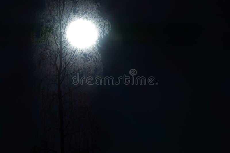 La luna splende attraverso l'albero di betulla gelido Paesaggio di notte fotografie stock