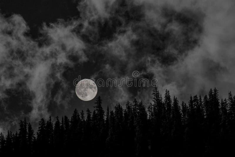 La lune au-dessus de l'arbre a rayé le ridgeline photo stock