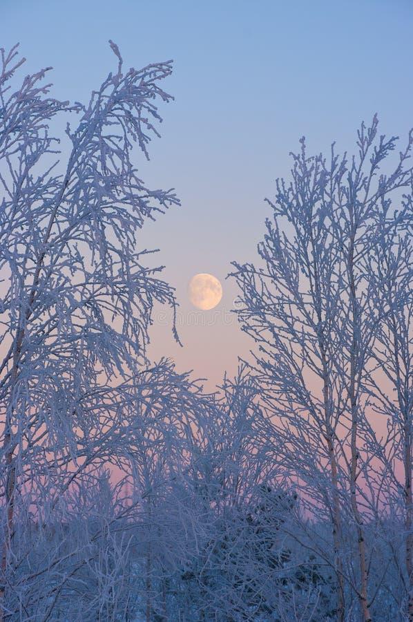 La lune croissante image libre de droits