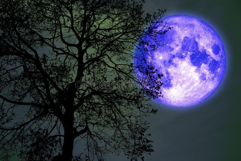 la lune noire sur le ciel nocturne en arrière sur la silhouette sombre forêt illustration de vecteur