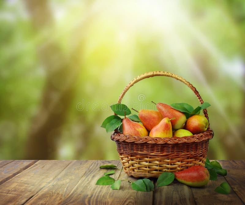 La luz del sol brilla en una cesta de peras maduras thanksgiving Naturaleza imagen de archivo