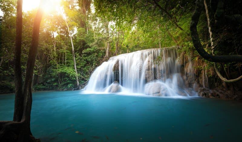 La luz del sol brilla a través de árboles y de hojas del bosque tropical fotos de archivo libres de regalías