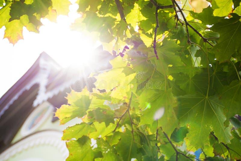 La luz del sol brillante brilla en las hojas de un árbol fotos de archivo