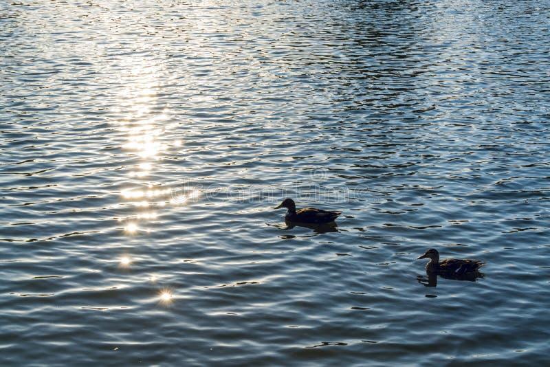 La luz del sol chispeante refleja en un agua del lago imagenes de archivo