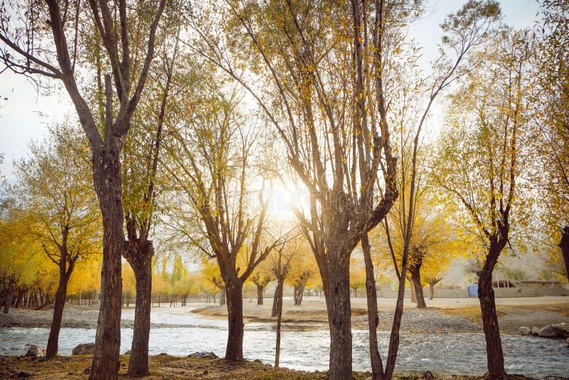 La luz del sol encendió el bosque colorido en la estación del otoño con vistas al río que fluía fotografía de archivo libre de regalías