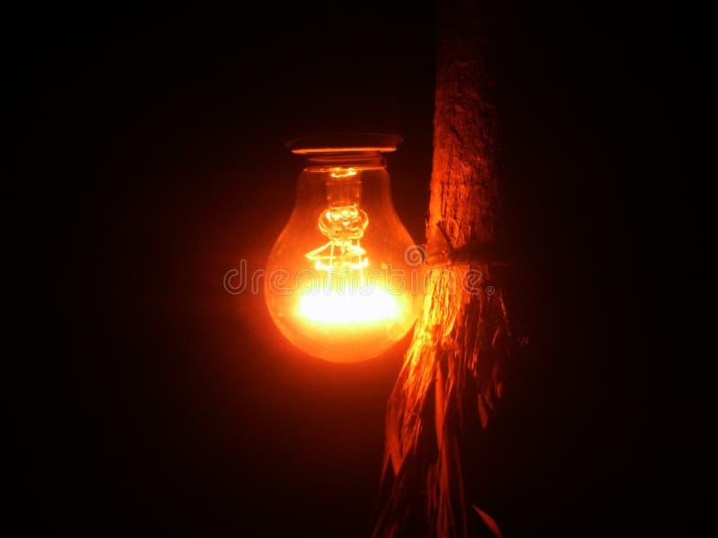 La luz en el bosque fotografía de archivo libre de regalías