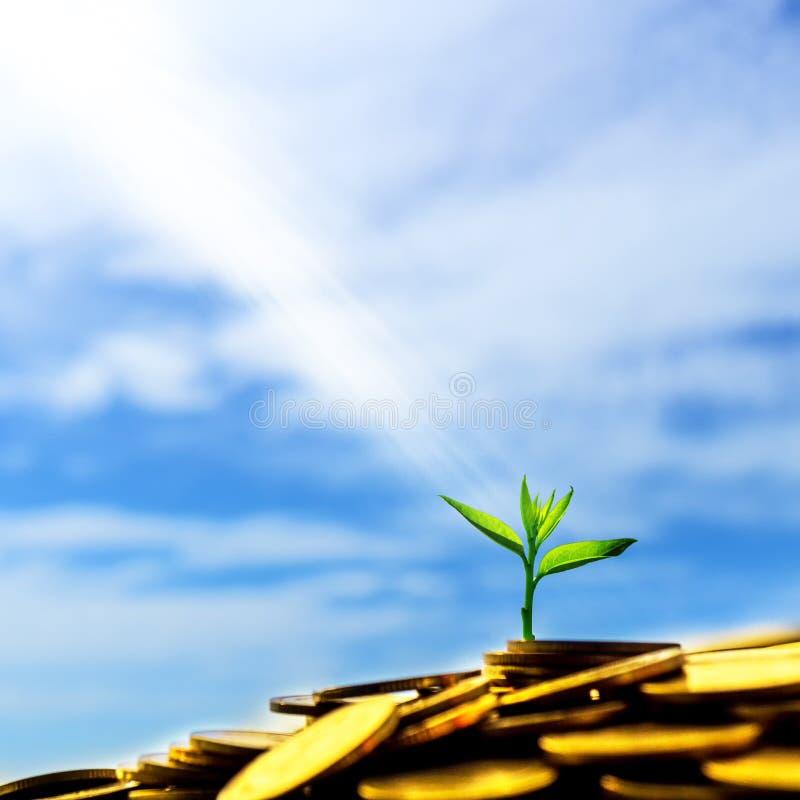 La luz que brilla en poca planta verde que brilla intensamente en la pila de oro fotos de archivo libres de regalías