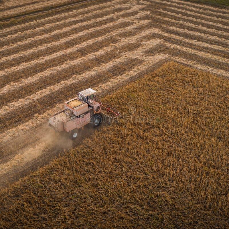 La máquina segador que trabaja en campo y siega la soja ucrania Silueta del hombre de negocios Cowering foto de archivo libre de regalías