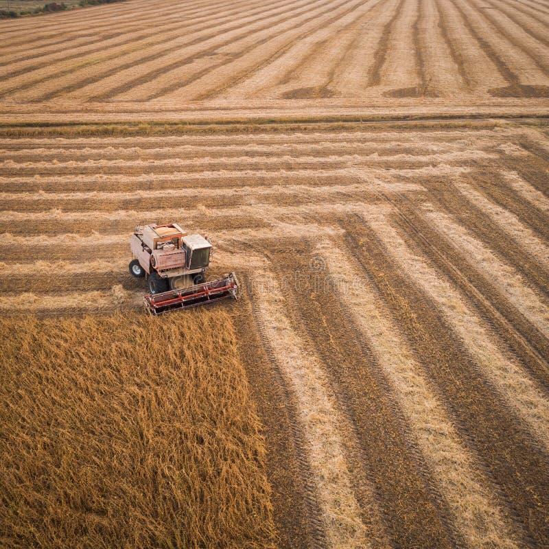 La máquina segador que trabaja en campo y siega la soja ucrania Silueta del hombre de negocios Cowering fotografía de archivo libre de regalías