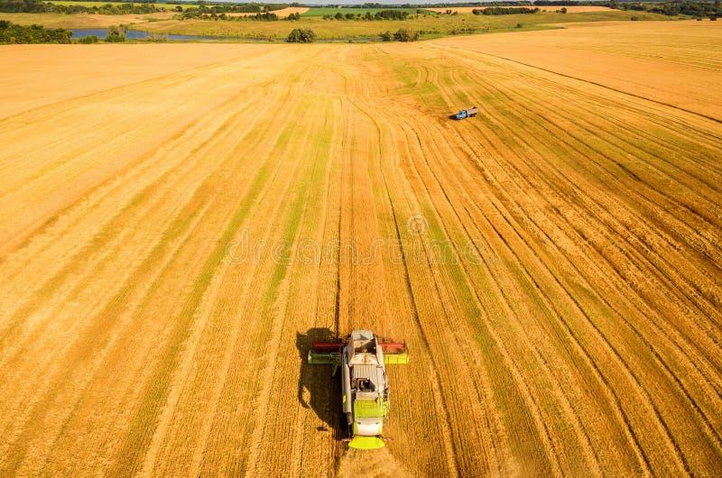 La máquina segador que trabaja en campo y siega trigo ucrania Silueta del hombre de negocios Cowering fotografía de archivo libre de regalías