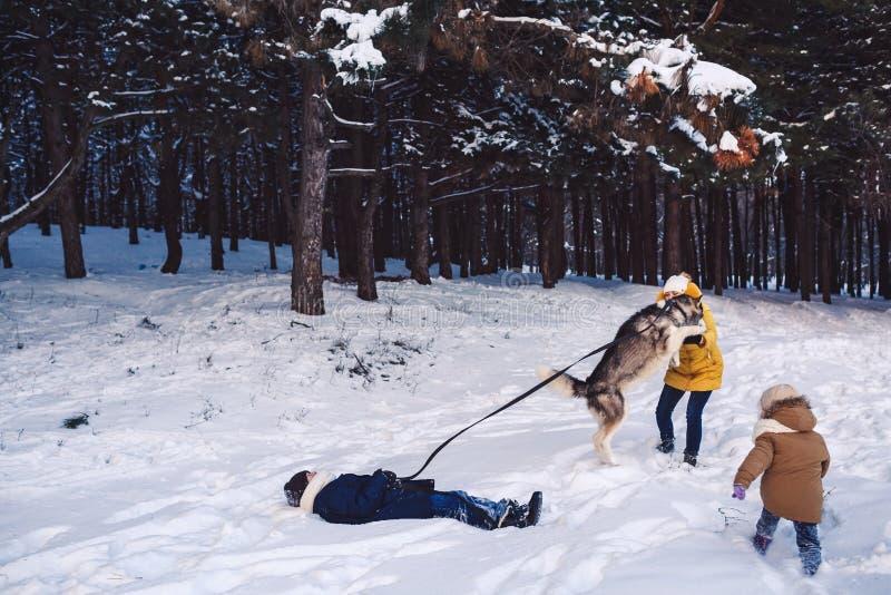 La mère avec la fille et le fils ont l'amusement jouant avec un chien dans un parc d'hiver Le concept du passe-temps actif pendan image libre de droits