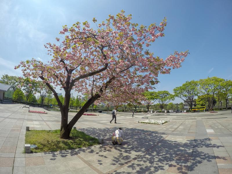 La mère japonaise amène son bébé voir l'atmosphère extérieure au pair photos stock