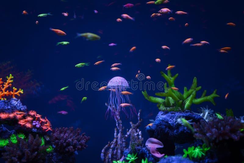 La méduse nage sous l'eau photos stock