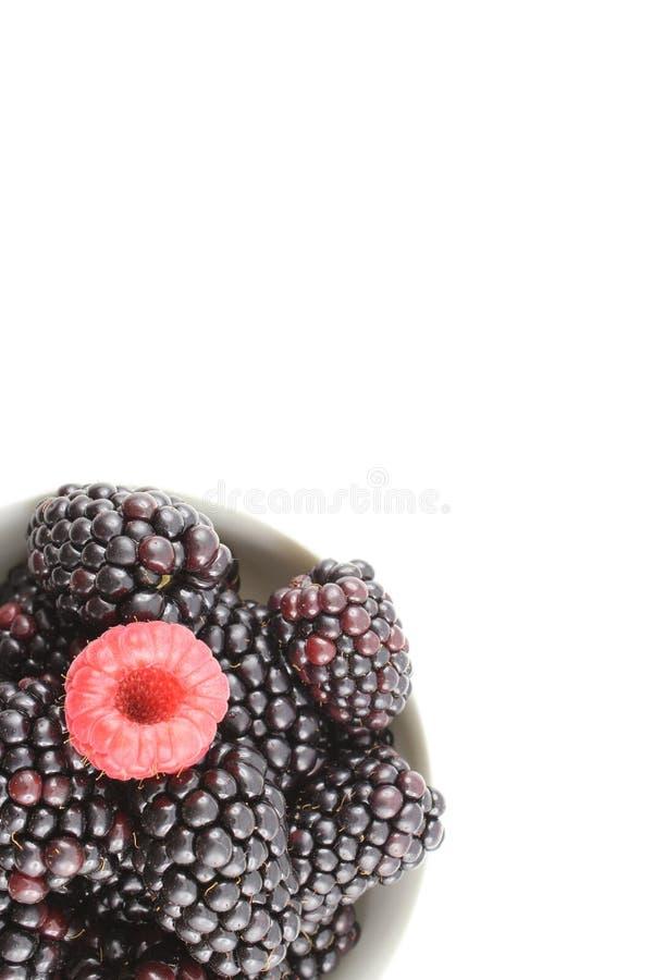 La mûre fraîche et la framboise rouge porte des fruits dans une petite cuvette blanche image libre de droits