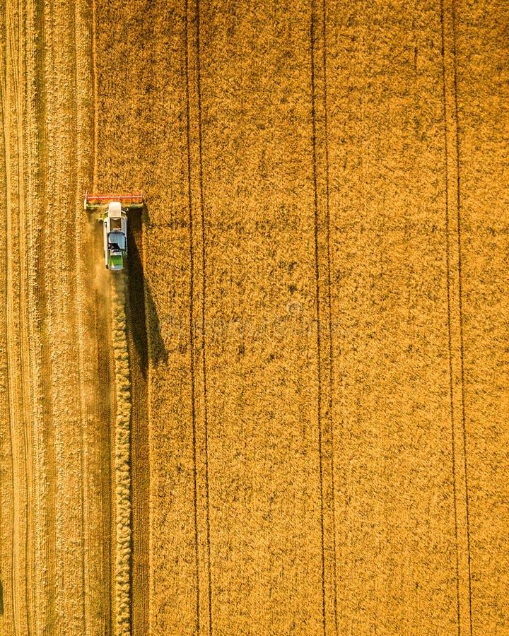 La m?quina segador que trabaja en campo y siega trigo ucrania Silueta del hombre de negocios Cowering fotografía de archivo