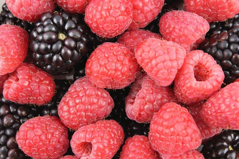 La mûre fraîche et la framboise rouge porte des fruits texture de fond de nourriture de plan rapproché images stock