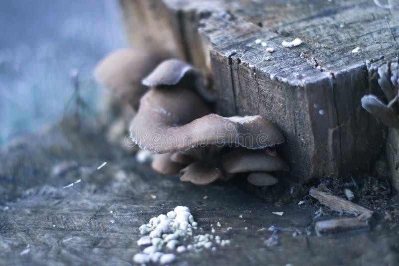 La mañana escarchada en el bosque prolifera rápidamente en la helada en el tocón fotos de archivo