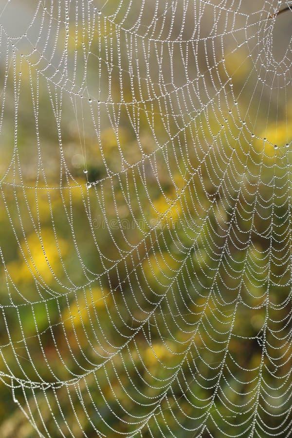 La mañana rocía en spiderweb por la mañana fotografía de archivo