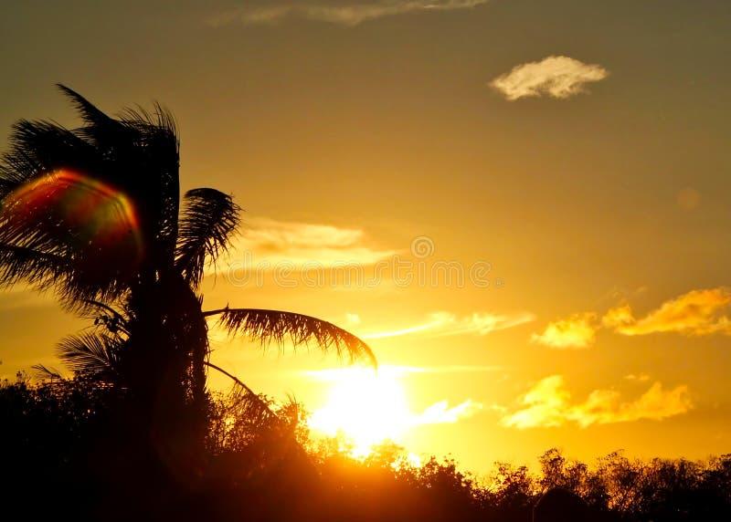 La macchia solare colorata arcobaleno sorvola le foglie di palma in cielo del tramonto nella chiave maratona fotografia stock libera da diritti