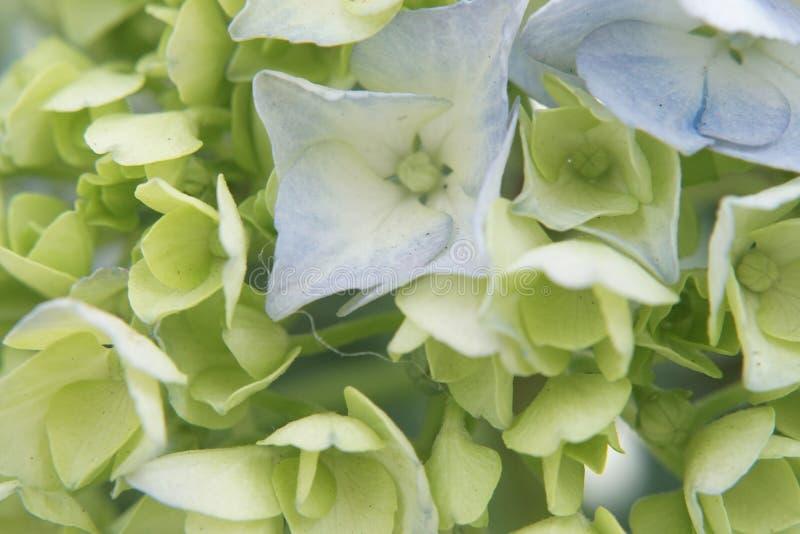 La macro coloreó el lanzamiento de la flor foto de archivo