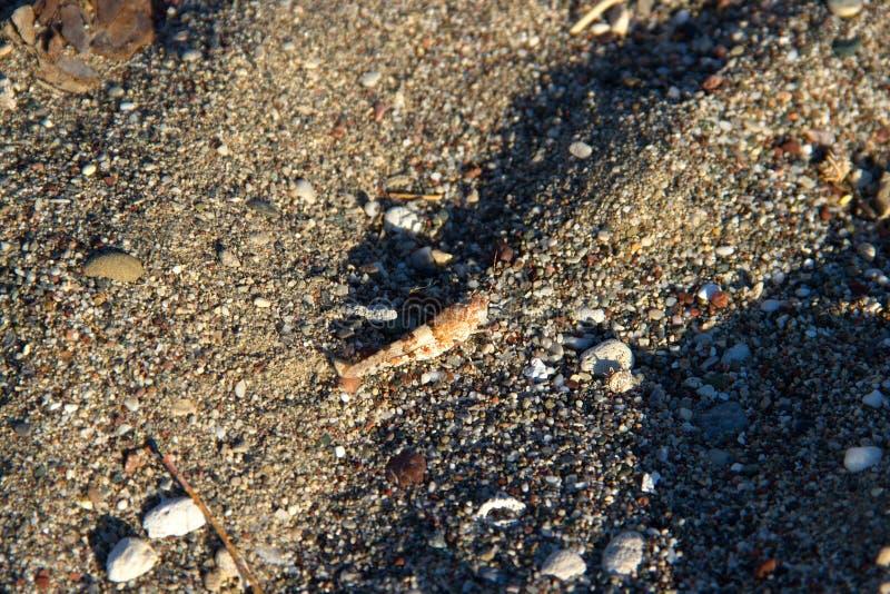 La macro del insec di Dragounfly dettaglia la spiaggia Grecia Rhodos fotografia stock