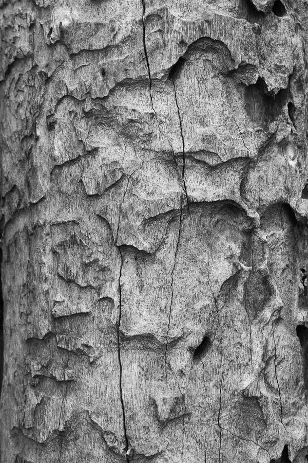 La macro di una corteccia in bianco e nero crea un effetto astratto o fotografia stock libera da diritti
