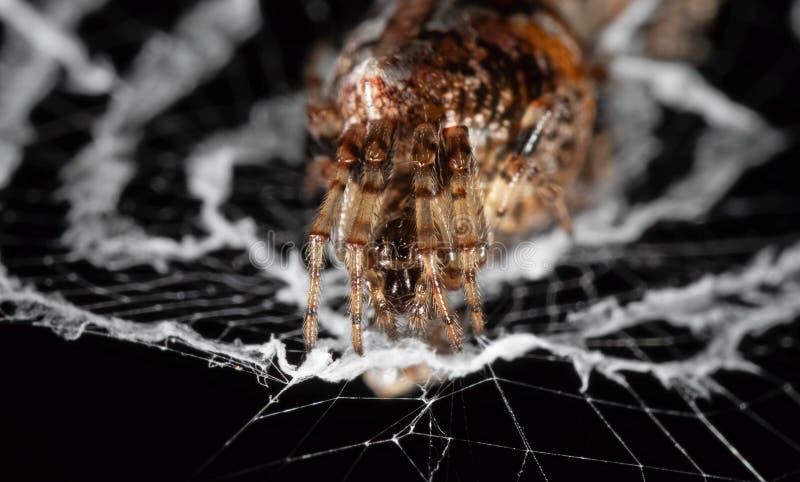 La macro photo des araign?es sont sur le Web sur le fond noir photographie stock