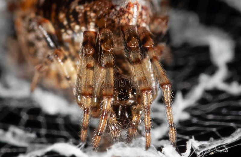 La macro photo des araign?es sont sur le Web photographie stock