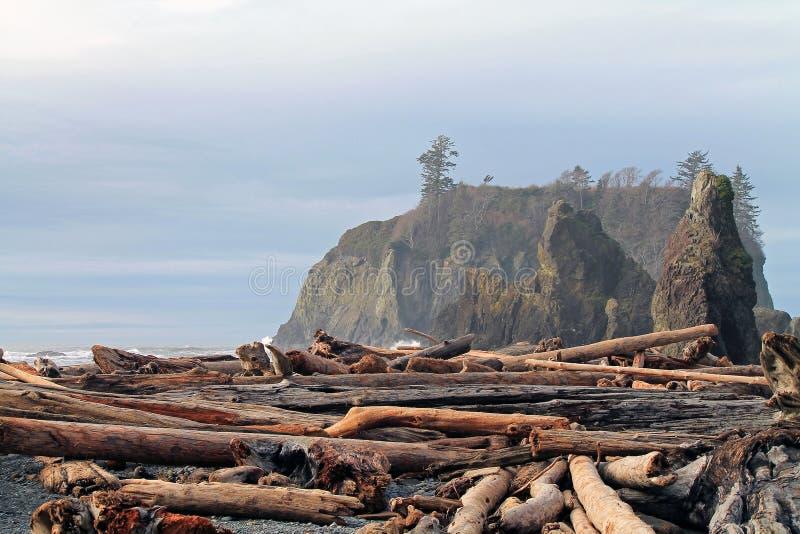 La madera de deriva registra el recubrimiento de una playa con Seastacks foto de archivo libre de regalías