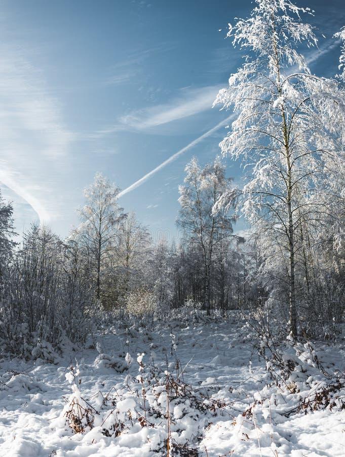 la madera de la nieve en el día de /frosty del día soleado en el bosque de la nieve fotos de archivo libres de regalías
