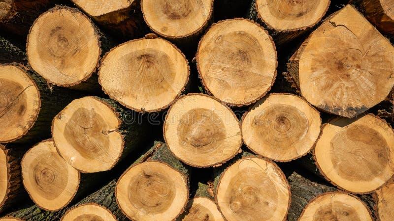 La madera del álamo registra el fondo imagen de archivo libre de regalías