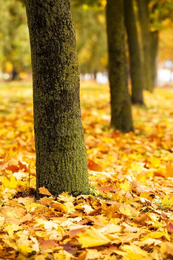 La madera del otoño imagen de archivo libre de regalías