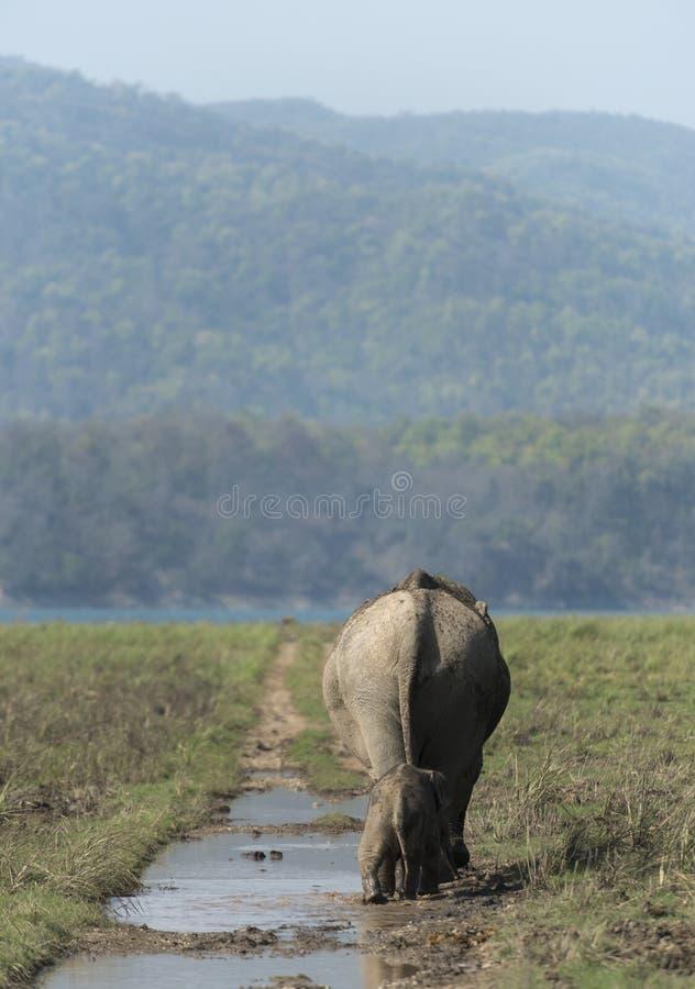 La madre ed il bambino dell'elefante che camminano sulla foresta trascinano fotografie stock