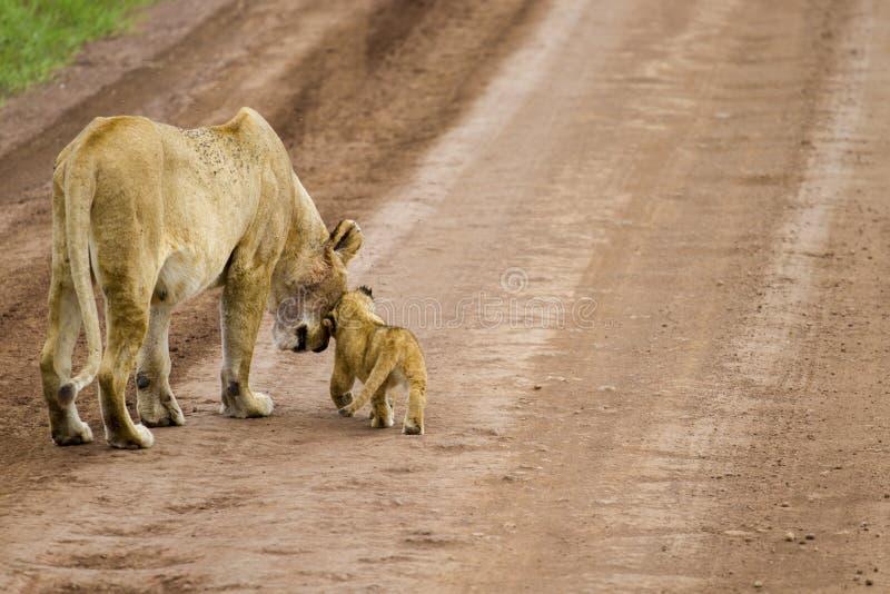 La madre ed il cucciolo immagini stock libere da diritti