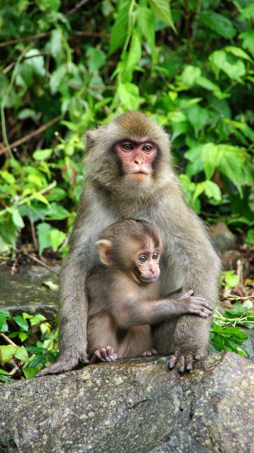 La madre y el pequeño macaque en la nieve de Jigokudani monkey el parque foto de archivo