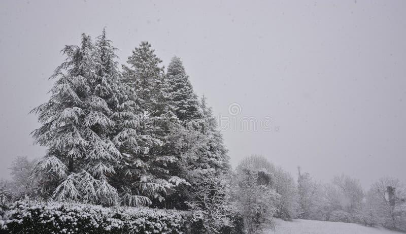 La magia de la nieve durante los días de fiesta de la Navidad fotografía de archivo