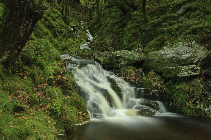 La magia della foresta fotografia stock libera da diritti