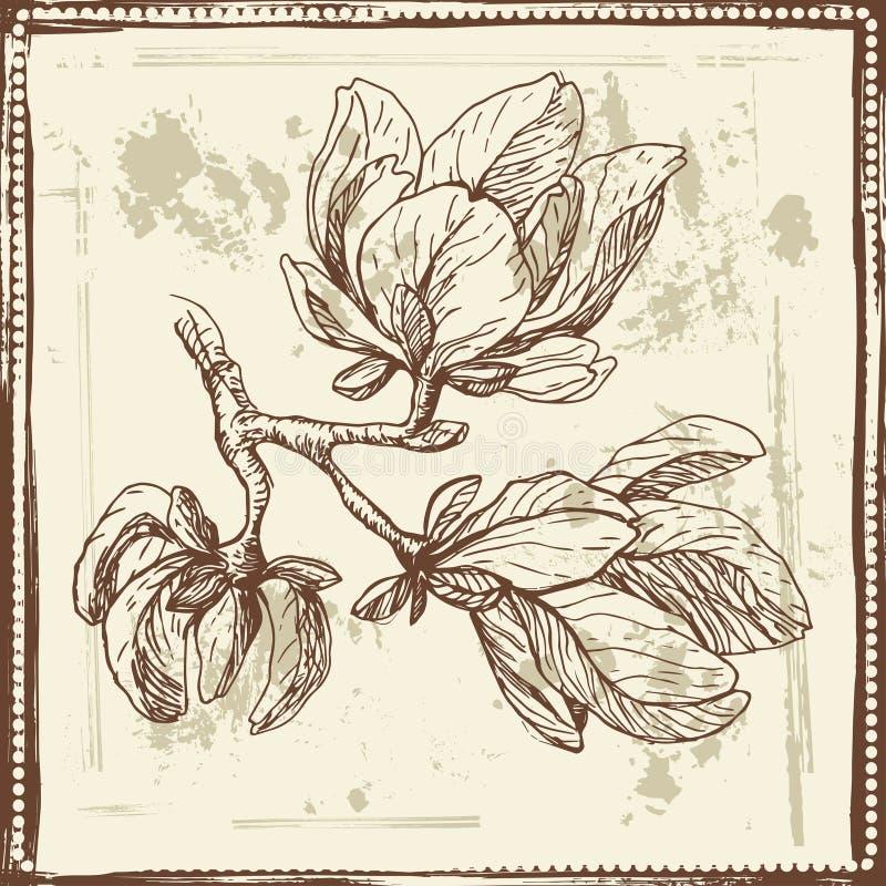 La magnolia dibujada mano florece bosquejo libre illustration