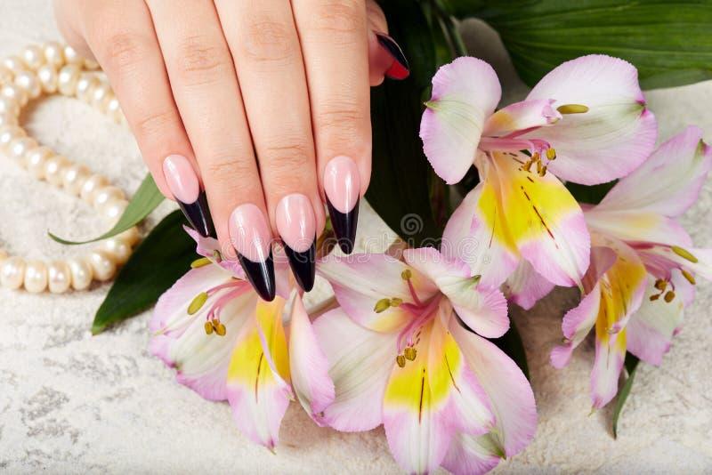 La main avec de longs ongles manucurés français artificiels et le bouquet du lis fleurissent photographie stock