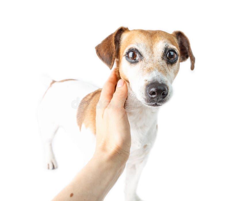 La main a caressé le chien avec effrayé image libre de droits