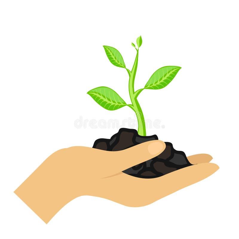 La main de la femme tiennent la plante verte sur le fond blanc, illustration courante de vecteur illustration stock