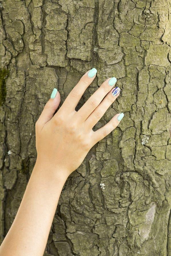 La main de la fille dans l'arbre image stock