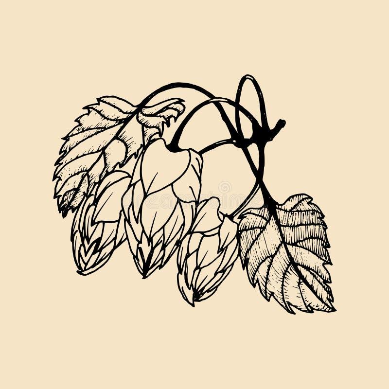 La main de vecteur a esquissé l'illustration des houblon Conception d'herbes de brasserie Remettez l'icône esquissée d'usine d'im illustration libre de droits