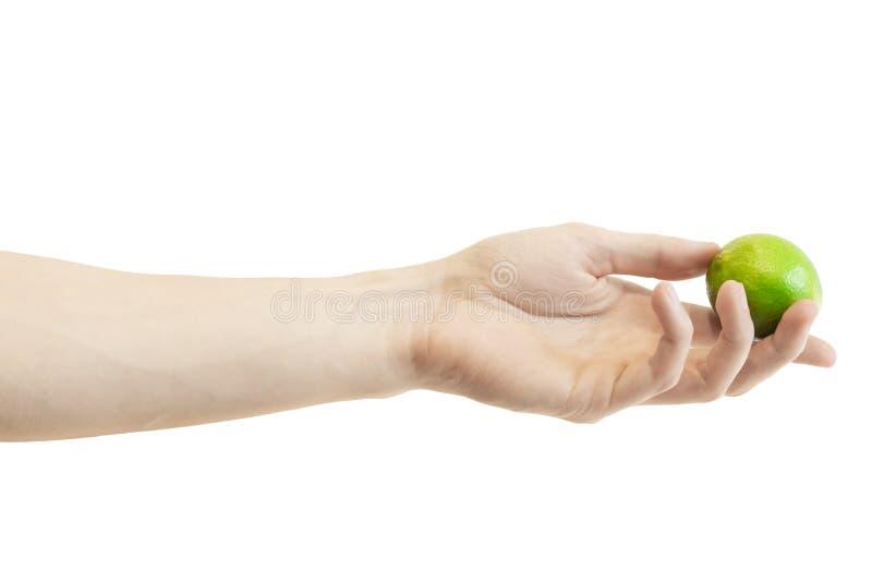 La main des hommes donne une chaux entière d'isolement sur le fond blanc Limette verte juteuse photos stock